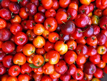Frutta del Acerola Fotografie Stock