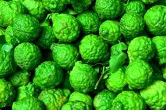 Frutta del bergamotto Fotografia Stock