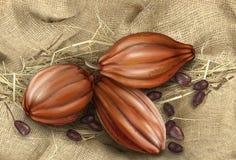 Frutta del cacao su un fondo di vecchio tessuto Fotografia Stock Libera da Diritti