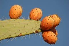 Frutta del cactus Fotografia Stock Libera da Diritti