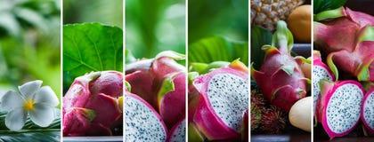 Frutta del drago nei termini naturali su un bello backg tropicale Immagine Stock
