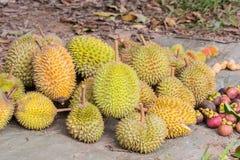 Frutta del Durian nell'azienda agricola di agricoltura Fotografie Stock