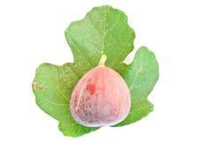 Frutta del fico Immagini Stock