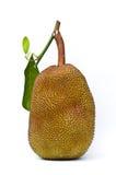 Frutta del Jack su priorità bassa bianca Fotografia Stock Libera da Diritti