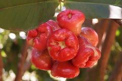 Frutta del Kerala Immagini Stock