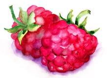 Frutta del lampone Fotografia Stock