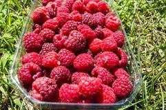 Frutta del lampone del primo piano in un canestro sul prato inglese Immagine Stock Libera da Diritti
