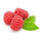 Frutta del lampone rosso isolata Fotografia Stock Libera da Diritti