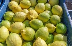 Frutta del limone agricoltura organica Fotografia Stock Libera da Diritti