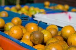 Frutta del mandarino Fotografie Stock Libere da Diritti
