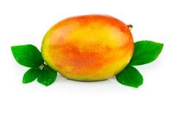 Frutta del mango con le foglie Immagine Stock Libera da Diritti