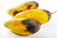 Frutta del mango della putrefazione Fotografia Stock Libera da Diritti