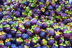 Frutta del mangostano Immagini Stock