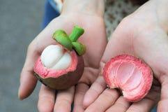 Frutta del mangostano aperta a disposizione Immagine Stock Libera da Diritti