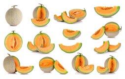 Frutta del melone del cantalupo della raccolta isolata sul backgrou bianco Immagini Stock Libere da Diritti