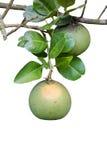 Frutta del pomelo Immagini Stock