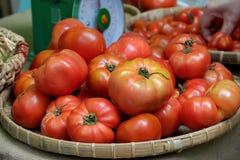 Frutta del pomodoro ad agricoltura di sicurezza giusta Fotografie Stock