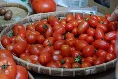 Frutta del pomodoro ad agricoltura di sicurezza giusta Fotografia Stock Libera da Diritti