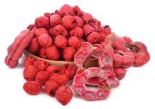 Frutta del tamarindo di Manila isolata su fondo bianco immagini stock libere da diritti
