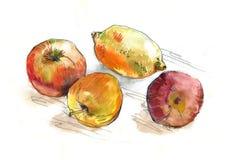 Frutta dell'acquerello sulla tavola Fotografia Stock Libera da Diritti