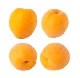 Frutta dell'albicocca Fotografia Stock