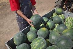 Frutta dell'anguria al rimorchio ed all'agricoltore Immagine Stock Libera da Diritti
