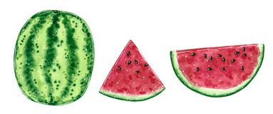 Frutta dell'anguria e fette, illustrazione dell'acquerello illustrazione di stock