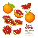 Frutta dell'arancia sanguinella illustrazione vettoriale