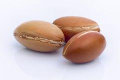 Frutta dell'argania spinosa (argania spinosa), dadi su fondo bianco, questa s Fotografia Stock Libera da Diritti