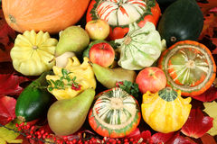 Frutta dell'autunno Fotografie Stock Libere da Diritti