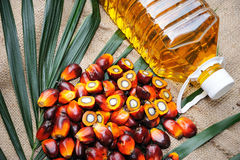 Frutta dell'olio di palma fotografia stock