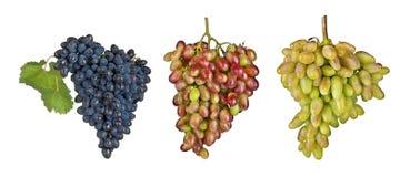 Frutta dell'uva isolata su un fondo bianco Immagine Stock Libera da Diritti