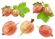 Frutta dell'uva spina sulla raccolta bianca Fotografia Stock Libera da Diritti