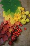 Frutta della caduta fotografie stock libere da diritti