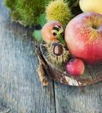 Frutta della foresta Fotografia Stock