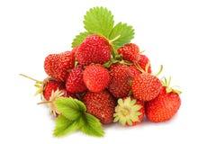 Frutta della fragola su bianco Immagine Stock