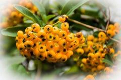 Frutta della natura Fotografia Stock