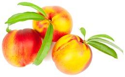 Frutta della nettarina Fotografia Stock Libera da Diritti