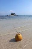 Frutta della noce di cocco Fotografie Stock Libere da Diritti
