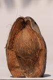 Frutta della noce di cocco dentro Fotografie Stock Libere da Diritti