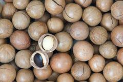Frutta della noce di macadamia Fotografie Stock