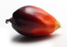Frutta della palma da olio Fotografia Stock