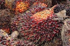 Frutta della palma da olio immagine stock