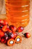 Frutta della palma da olio con l'olio di palma Fotografia Stock