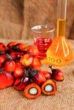 Frutta della palma da olio con l'olio di palma Immagine Stock