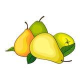 Frutta della pera Immagini Stock