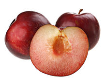 Frutta della prugna fotografia stock libera da diritti