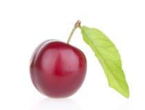Frutta della prugna con il foglio Immagine Stock Libera da Diritti