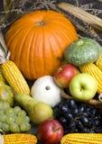 Frutta della raccolta Fotografia Stock