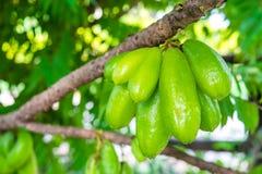 Frutta di averrhoa bilimbi Immagine Stock Libera da Diritti